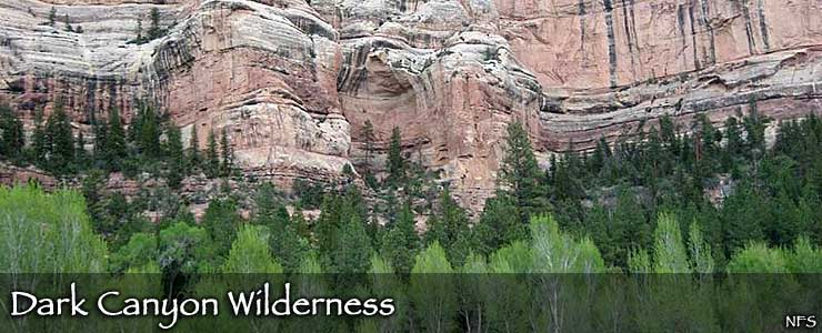 Aspens, pines and sandstone cliffs in the bottom of Dark Canyon Wilderness