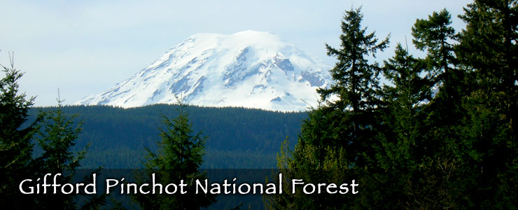 Mt. Rainier rises to the north of Gifford Pinchot National Forest