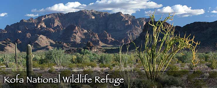 Ocotillo, open desert and stark mountains at Kofa National Wildlife Refuge