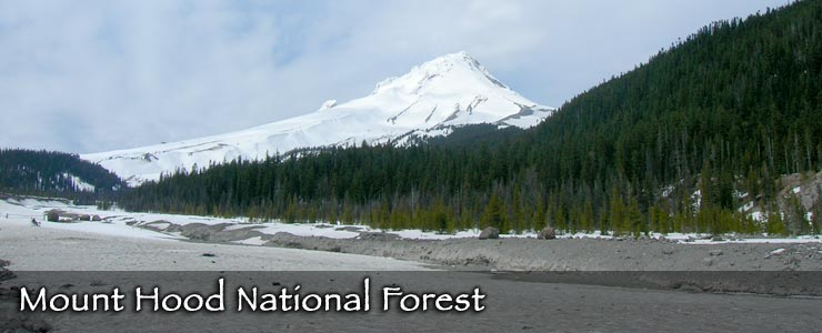 Mount Hood towers above Mount Hood National Forest