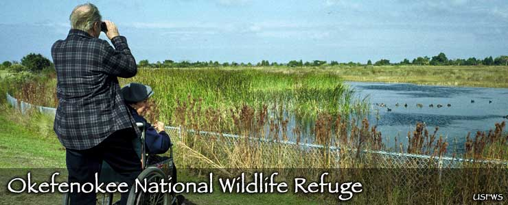 Birdwatchers looking across a wetland area to a pond littered with ducks at Okefenokee National Wildlife Refuge